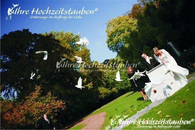 Weiße Tauben am Schloss Hugenporth