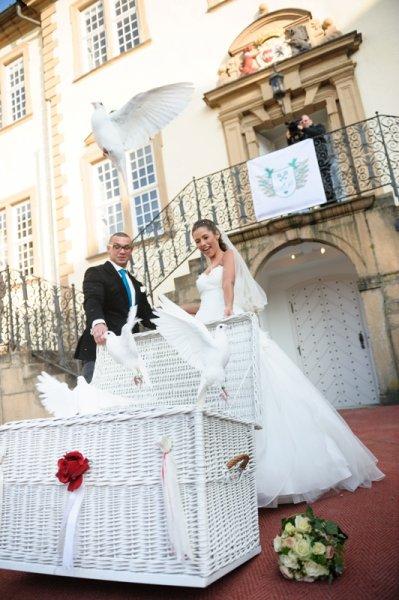 Hochzeitstauben bei Sarah und Pietro Lombardi 5 | ©kamermitherz