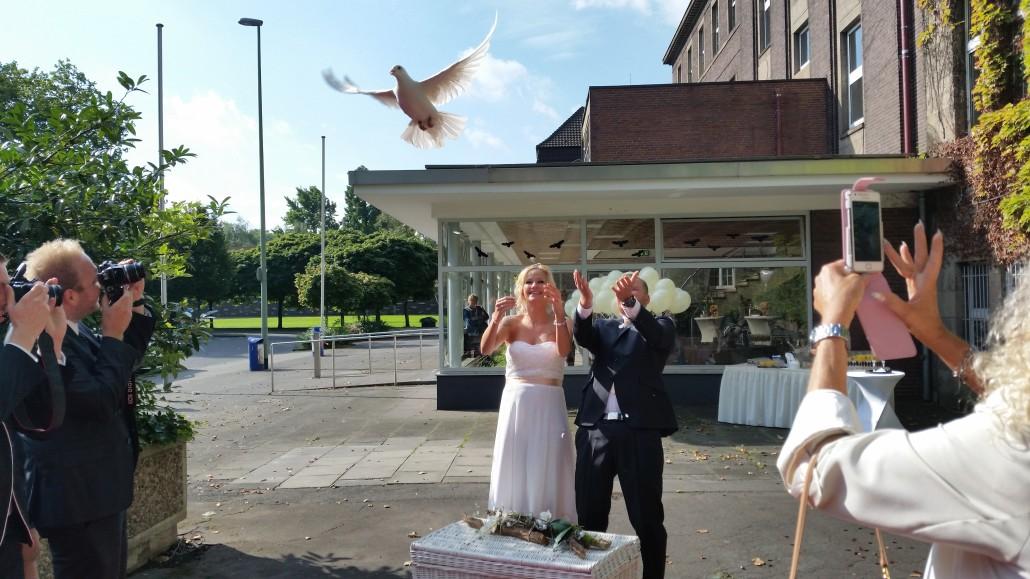 weiße Tauben fliegen Duisburg