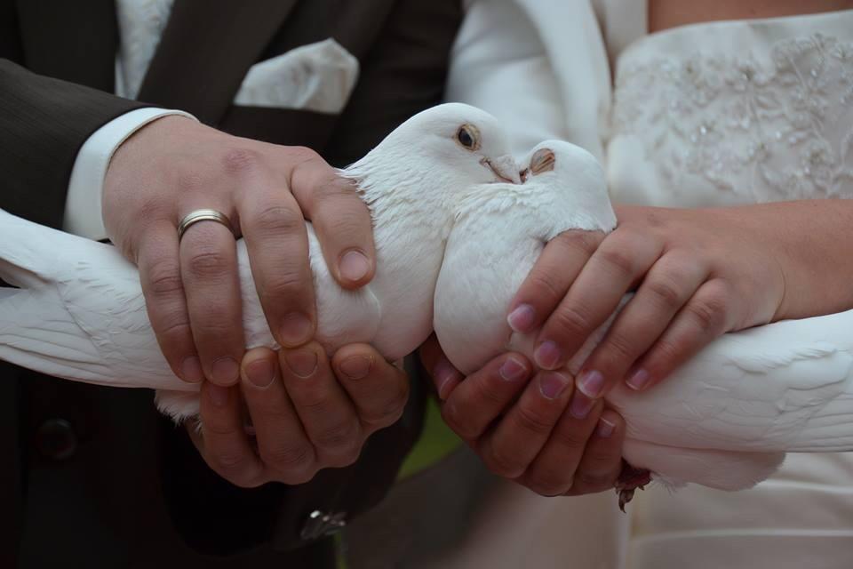 Weiße Tauben Standesamt Emsdetten Deitmars Hof