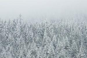Winterlandschaft - Tauben im Winter fliegen lassen