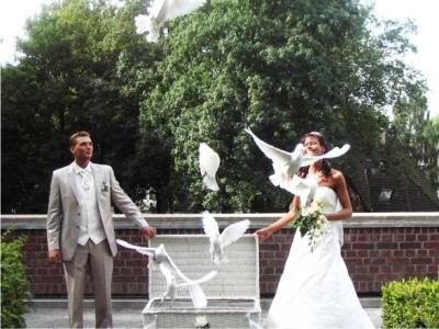 Hochzeitstauben Weisse Tauben Zur Hochzeit Am Standesamt Kirche