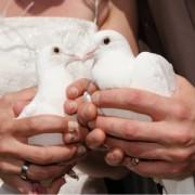 Tauben am Borkener Standesamt