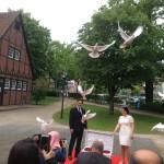 Brautpaar lässt die weißen Tauben aus dem Korb fliegen
